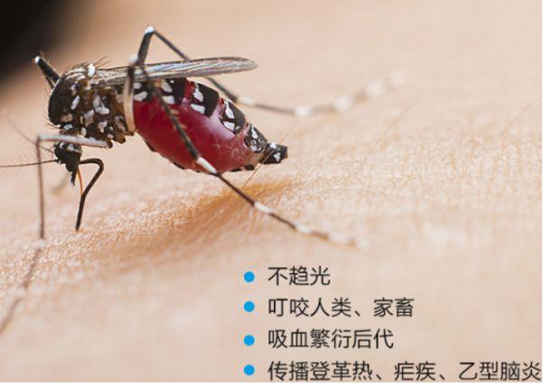 夏天多蚊,Maxttac灭蚊灯帮你全部灭光数字前端